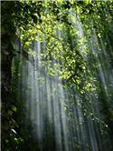 Veranstaltungsbild Waldfühlungen: Mit allen Sinnen den Sommer-Wald entdecken (klassisches Ferienspiel)
